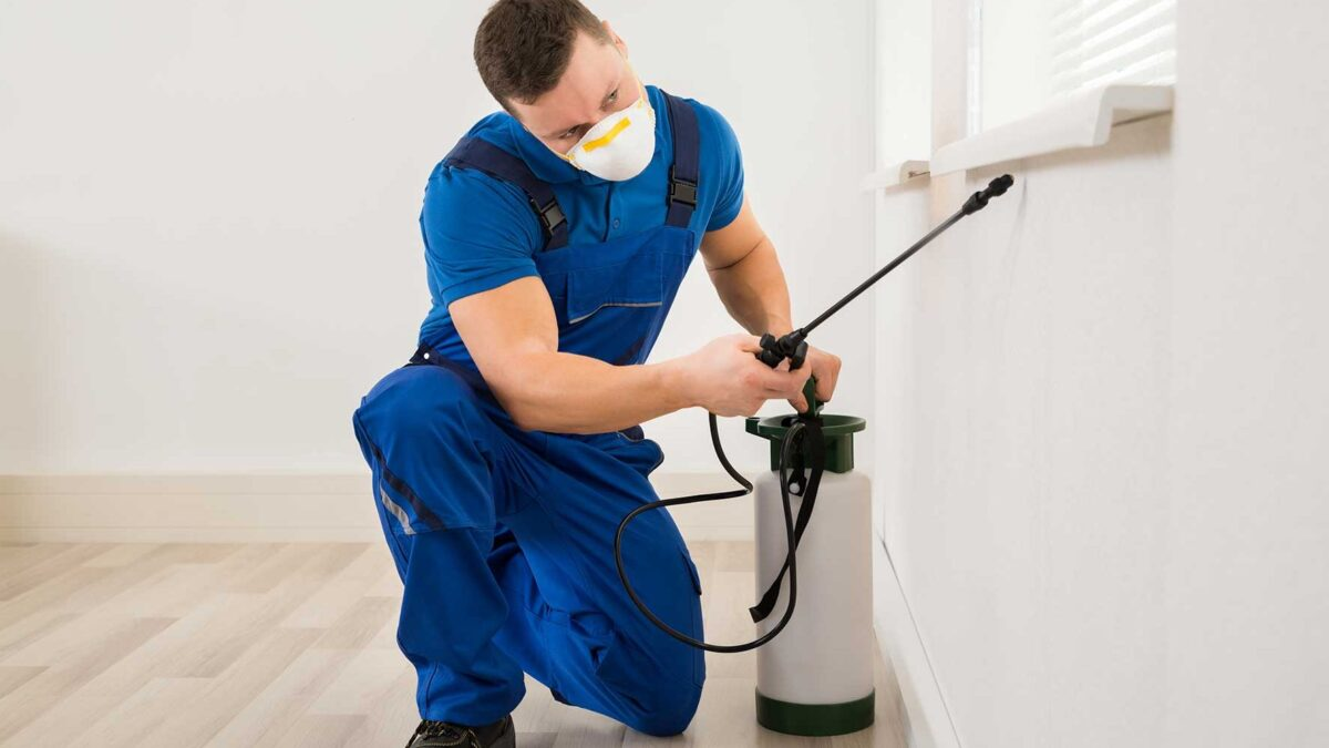 How to Protect Your Property from Pests?